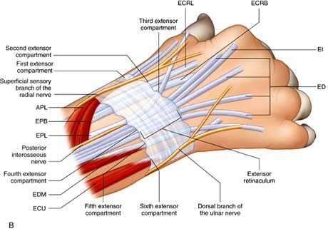 wrist george d goudelis md ph d Strained Ligament in Thumb Diagram of Thumb Pain
